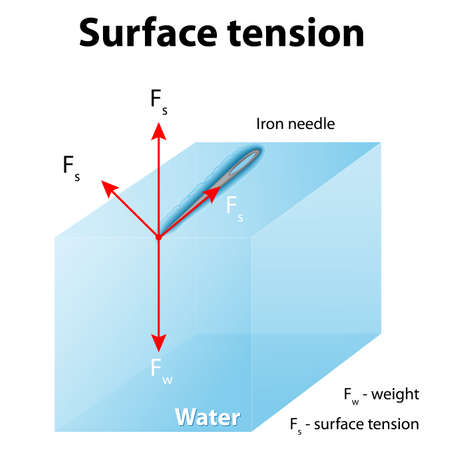 Surface tension. Iron needle stay atop the liquid because of surface tension. If the needle were placed point down on the surface, its weight acting on a smaller area would break the surface, and it would sink.