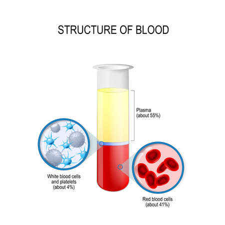 Illustration pour flask with blood components: red and white blood cells, plasma, and platelets. Composition of whole blood. Vector diagram for educational, biological, science and medical use - image libre de droit