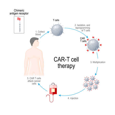 Illustration pour CAR T-cell therapy. Artificial leukocyte receptors are proteins that have been engineered for cancer immunotherapy (killing of tumor cells). genetically engineered. Vector diagram for medical, educational and science use - image libre de droit