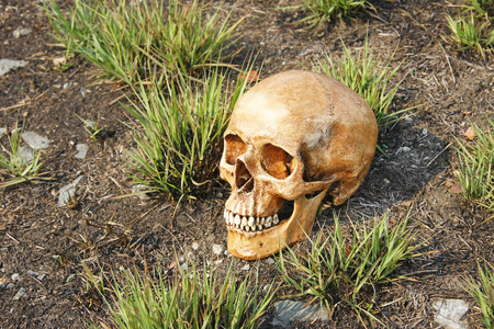 still life with skull on ground and grass background