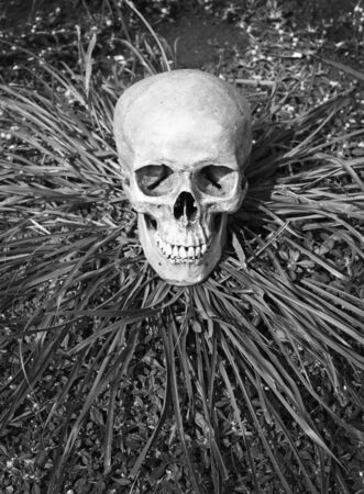 still life with skull human on dry ground in black and white filter effect.