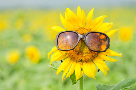 Photo pour Sunflower wearing sunglasses  - image libre de droit