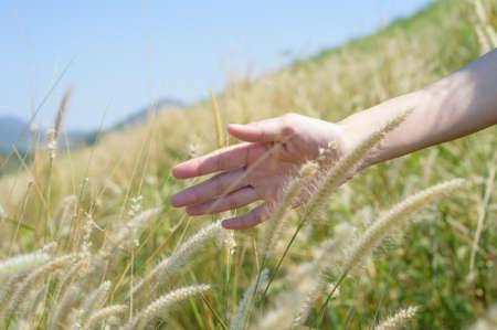 Photo pour Hand gentlely touches the grass field - image libre de droit