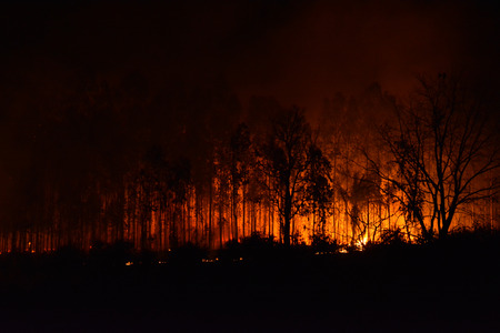 Forest Fire, the wildfire burning tree in red and orange color at night.