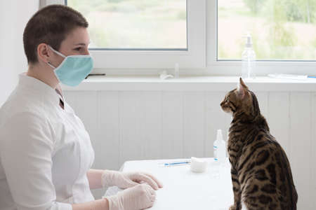 The cat is sitting on the table in front of the veterinarian. Animal and human look into each other\'s eyes. Reception at the veterinary clinic.