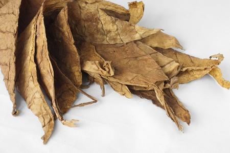 Photo pour Dried tobacco leaves, fine details closeup - image libre de droit