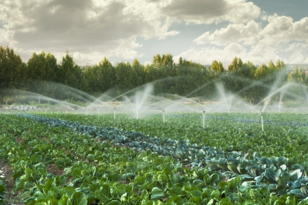 Photo pour Irrigation systems in a green vegetable garden - image libre de droit
