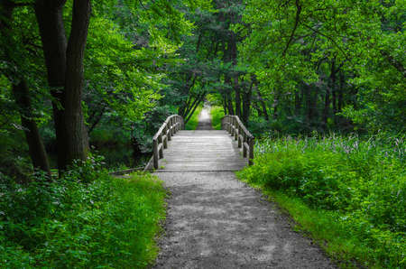 Photo for Old charming and romantic wooden bridge over a creek in the middle of the forest  - Royalty Free Image