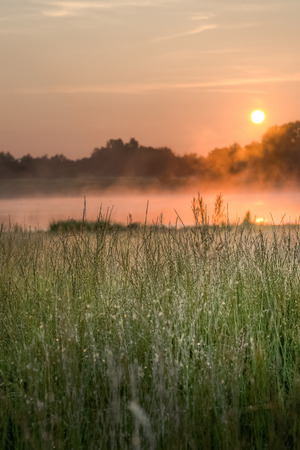 Grass grows wildly by a bog with the sun rising in the background
