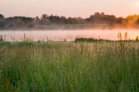 Grass grows wildly by a bog with mist above it
