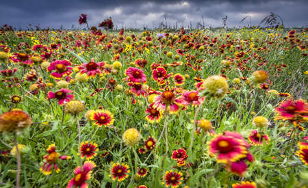 Windblown Wildflowers