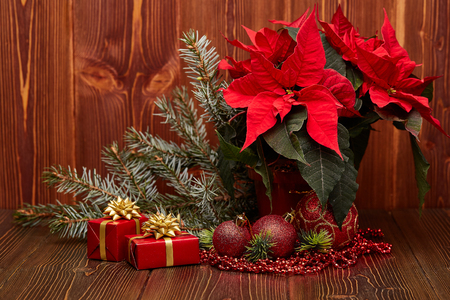 Christmas decoration with Red Poinsettia flowers (Euphorbia Pulcherrima), fir branch, gift boxes, red balls and beads on wooden background.  New year and Christmas background with copy space. Greeting card.
