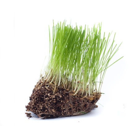 Green grass with roots of closeup isolated on white