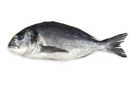 Photo pour Fresh bream fish isolated, close up - image libre de droit