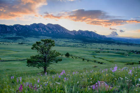 Beautiful wildflower sunset over the rolling green hills of Boulder, Colorado