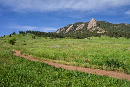 Beautiful Flatirons in Boulder, Colorado with blooming lupines