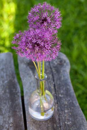 Allum flowers in vase on garden table