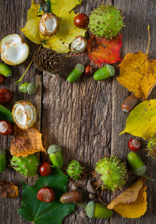 Acorns and chestnuts on wooden rustic table