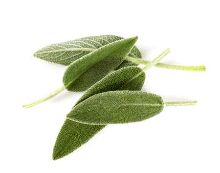 Foto de sage leaves isolated on white - Imagen libre de derechos