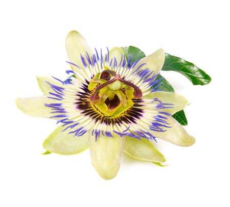 Photo pour passion flower isolated on white background - image libre de droit