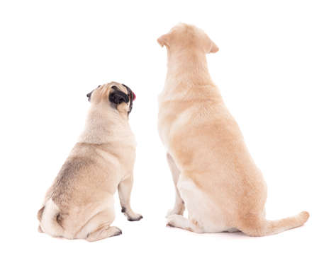 friendship concept - back view of two sitting dogs isolated on white background