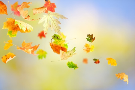 Autumn leaves falling and spinning on natural background の写真素材