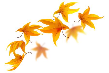 Falling autumn maple leaves on white background, vector illustration