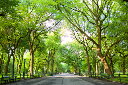Photo pour The Mall with American Elms in Central Park, New York - image libre de droit