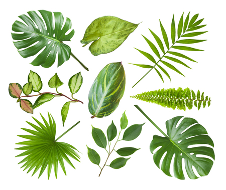 Photo pour Collage of different exotic plant leaves isolated on white - image libre de droit