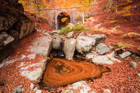 Through the Autumn bridge