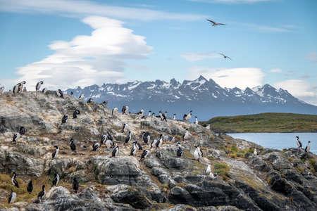 Cormorants (sea birds) island - Beagle Channel, Ushuaia, Argentina