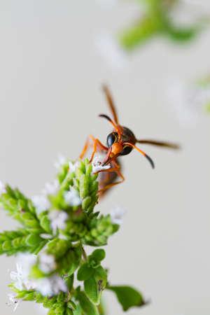 Foto de wasp - Imagen libre de derechos