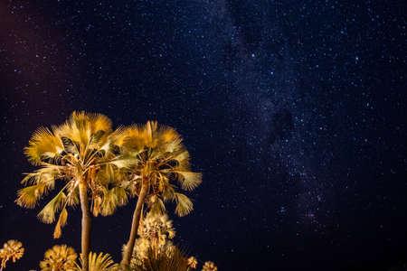Illuminated Palm Tree and Night Sky with Stars and Milky Way Galaxy in Palmwag, Namibia