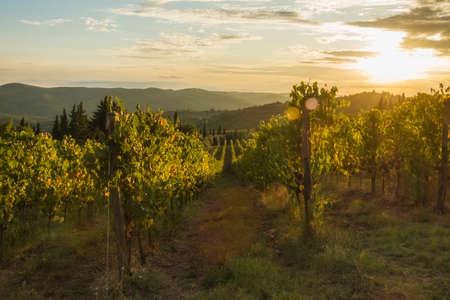 Vineyard near Volpaia town in Chianti region in province of Siena. Tuscany landscape. Italy