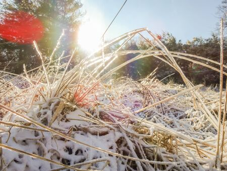 frozen grass on a meadow with sunshine