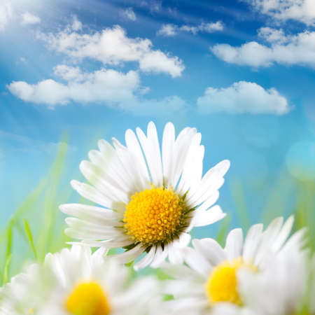 Photo for Summer - Daisy, blue sky and the sun behind - Royalty Free Image