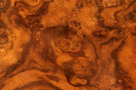 Hazelwood Root Texture