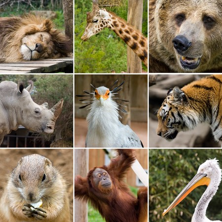 collage photo composition of some wild animals