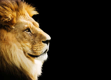 The king of all animals portrait with copy space