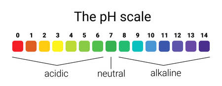 Illustration for ph scale. infographic acid-base balance. scale for chemical analysis acid base. vector illustration. colorful graph for test - Royalty Free Image