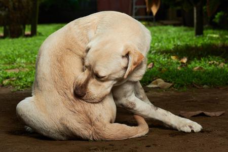Photo pour scratching himself dog outside in green garden - image libre de droit