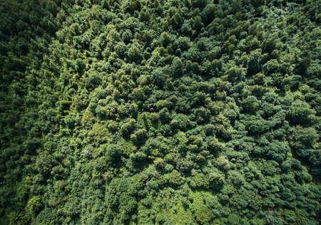Photo pour Green forest texture background aerial above top view - image libre de droit