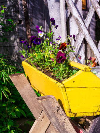 violet colored in yellow wooden box for flowers