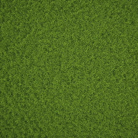 Green grass field background texture.