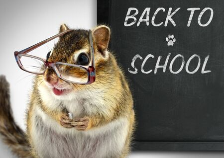 Funny chipmunk in glasses, back to school concept