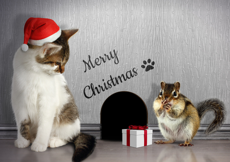 Christmas congratulate concept, Funny cat dressed santa hat and gift