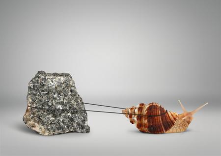 Photo pour Snail pulling big stone, persistence concept - image libre de droit