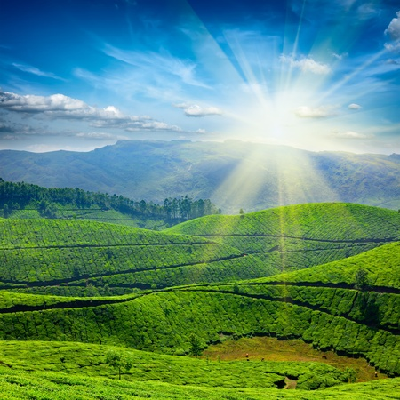 Photo pour Tea plantations. Munnar, Kerala, India - image libre de droit