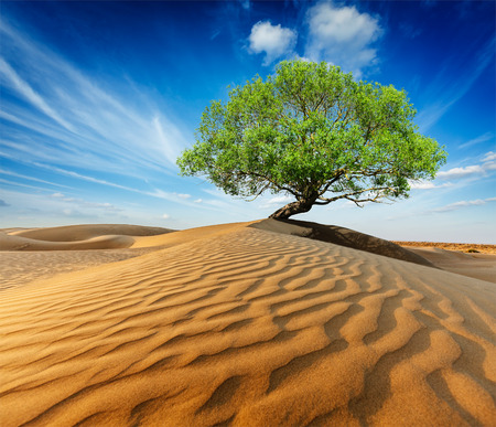 Lonely green tree in desert dunes