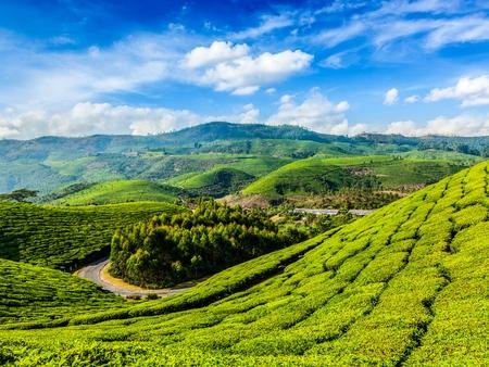 Photo pour Green tea plantations in Munnar, Kerala, India - image libre de droit